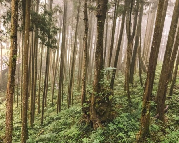 hiking Alishan forest recreational area, Taiwan