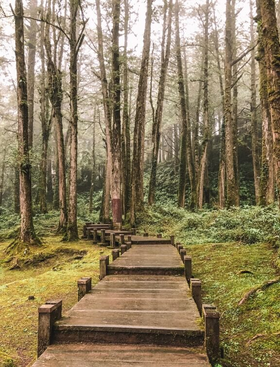 Alishan, Taiwan // Are you planning to visit Alishan? We set out everything you need to know here! From the best things to do in Alishan and how to get there. Plus all the tips you need to make the most of your Alishan trip. #alishan #taiwan # travelguide #travelplanning #firsttimersguide #eastasia #travel #taiwantrip