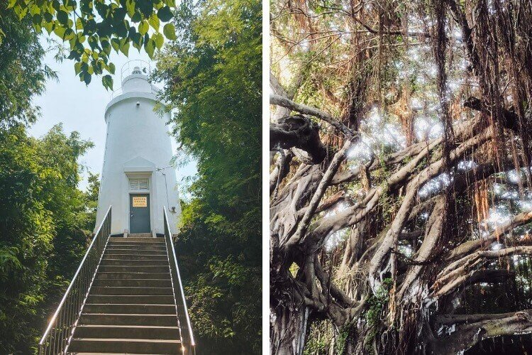 The White Lighthouse and Century-Old Banyan Tree are popular tourist attractions on Xiao Liu Liu.