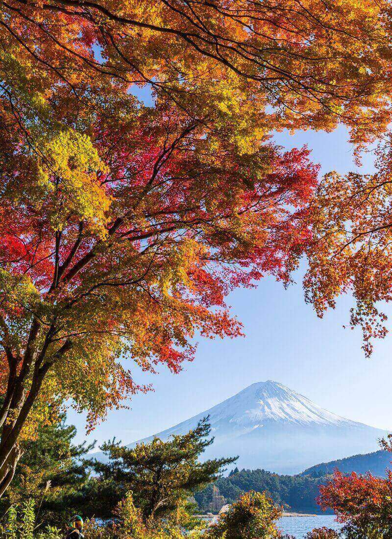Japan Autumn Itinerary: Best Places to Visit in Fall