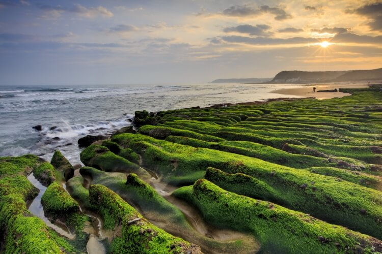 volcanic rock formations covered in vibrant algae at Laomei Green Reef at sunset